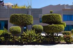 美丽的盆景树和被修剪的灌木在庭院里 免版税库存照片
