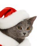 美丽的盖帽猫灰色新的s年 免版税库存照片