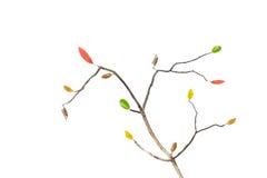 美丽的真正的叶子,秋天设计元素,隔绝在白色 库存图片