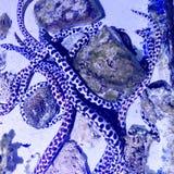 美丽的真正的鱼在干净的玻璃透明水族馆的石珊瑚中游泳 库存图片
