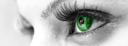 美丽的眼睛女性绿色 库存照片