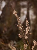 美丽的石南花从去年在一个自然生态环境 免版税库存照片