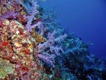 美丽的礁石 免版税库存照片
