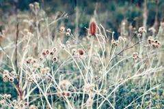 美丽的神仙的梦想的不可思议的植物名刺,定调子与instagram在减速火箭的葡萄酒颜色柔和的淡色彩的vsco过滤器破坏了样式 库存图片