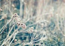 美丽的神仙的梦想的不可思议的植物名刺,定调子与instagram在减速火箭的葡萄酒颜色柔和的淡色彩的vsco过滤器破坏了样式 免版税库存照片