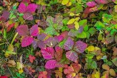 美丽的秋叶作为背景 免版税库存照片