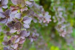美丽的秋叶的季节 背景蓝色云彩调遣草绿色本质天空空白小束 免版税库存照片