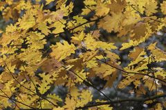 美丽的秋叶的季节 背景蓝色云彩调遣草绿色本质天空空白小束 图库摄影