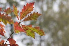 美丽的秋叶的季节 背景蓝色云彩调遣草绿色本质天空空白小束 库存照片