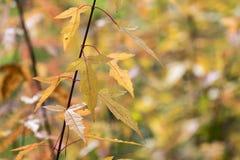 美丽的秋叶的季节 背景蓝色云彩调遣草绿色本质天空空白小束 免版税图库摄影