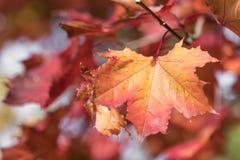 美丽的秋叶的季节 背景蓝色云彩调遣草绿色本质天空空白小束 库存图片