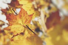 美丽的秋叶的季节 背景蓝色云彩调遣草绿色本质天空空白小束 免版税库存图片