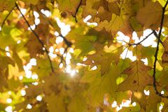 美丽的秋叶的季节 库存图片