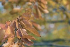 美丽的秋叶的季节 图库摄影