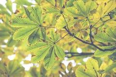 美丽的秋叶的季节 免版税库存图片
