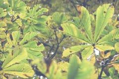 美丽的秋叶的季节 库存照片