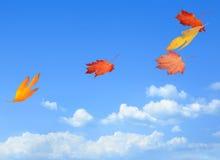 美丽的秋叶继续了微风 免版税库存照片