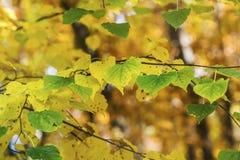 美丽的秋叶 库存照片