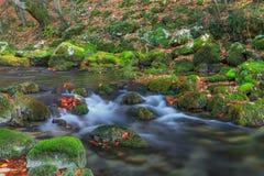 美丽的秋天叶子和山在森林里放出 库存图片
