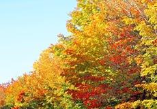 美丽的秋天叶子在金子和绯红色树荫下  免版税库存照片