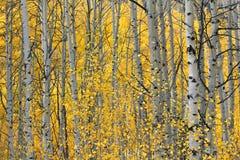 美丽的秋天叶子 库存照片