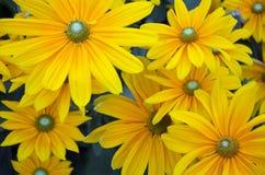 美丽的秋天向日葵 免版税图库摄影