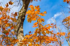 美丽的秋天树和瀑布 免版税库存照片