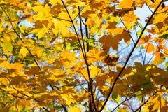 美丽的秋天树和瀑布 库存图片