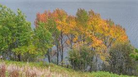美丽的秋天树 库存图片