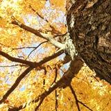 美丽的秋天树 免版税库存图片