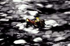 美丽的秋天桦树叶子在冷的河潮流黏附了 免版税库存图片