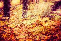 美丽的秋天森林或公园叶子,落室外自然 免版税库存照片