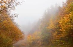 美丽的秋天森林有雾的风景 库存照片