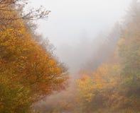 美丽的秋天森林有雾的风景 库存图片