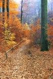 美丽的秋天森林路径 免版税图库摄影