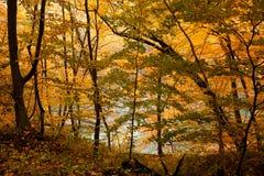 美丽的秋天森林金黄风景  库存照片