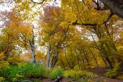 美丽的秋天森林14 库存照片