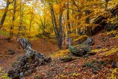 美丽的秋天森林12 库存图片
