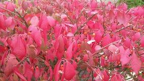 美丽的秋天灌木 图库摄影