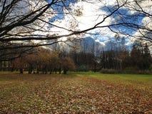 美丽的秋天照片在一个晴天 免版税库存照片