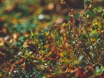 美丽的秋天照片 库存照片
