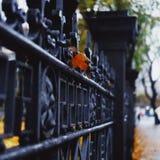 美丽的秋天照片 免版税图库摄影