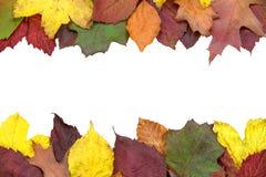 美丽的秋天装饰 免版税库存图片
