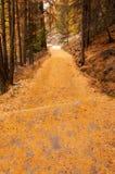 美丽的秋天道路在策马特地区 免版税库存照片
