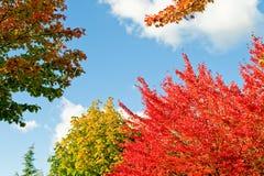 美丽的秋天风景结构树 免版税库存照片
