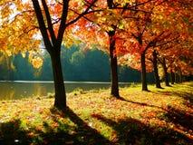 美丽的秋季胡同 免版税库存照片