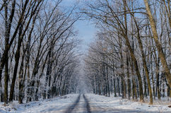 美丽的积雪的路 高美丽的树在雪和fr 库存照片