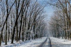 美丽的积雪的路 高美丽的树在雪和fr 免版税库存图片