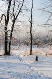 美丽的积雪的路 高美丽的树在雪和fr 免版税库存照片
