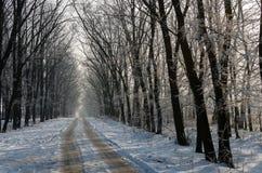美丽的积雪的路 高美丽的树在雪和fr 库存图片